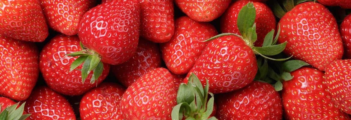 George Perry Ltd  - A World of Fresh Produce - Wholesale Fruit and